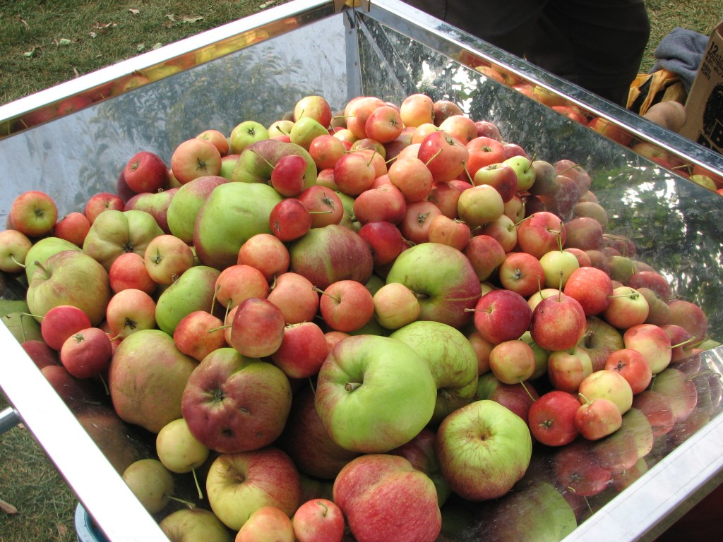 apples for cider
