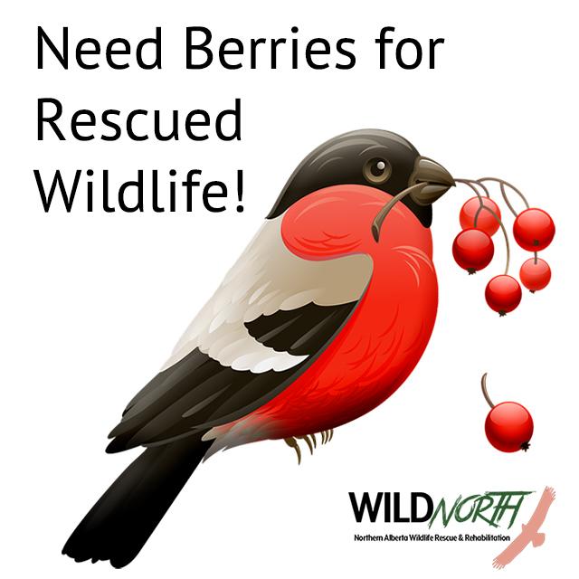 WildNorth Needs Berries