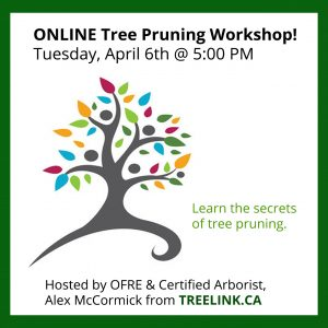Tree Pruning Workshop - April 6th